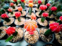 Cactuss аранжировало в ряд стоковые изображения