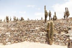 Cactusscène Stock Afbeelding