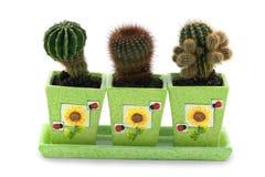 Cactussen Stock Afbeeldingen