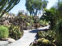 Cactussen Royalty-vrije Stock Foto's