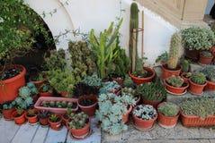 Cactussen of Cactussen Royalty-vrije Stock Afbeelding