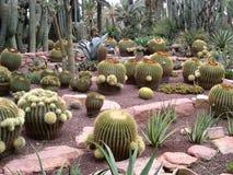 Cactussen alle grootte stock foto's