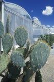 Cactussen bij de Universiteit van Milieu het Onderzoeklaboratorium van Arizona in Tucson, AZ stock foto