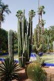 Cactussen bij Fontein stock afbeeldingen