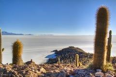 Cactussen bij saltflates Royalty-vrije Stock Afbeelding