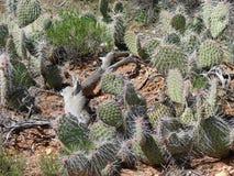 Cactussen die Close-up groeperen stock afbeelding