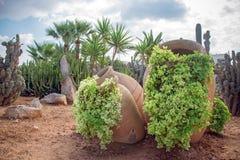 Cactussen en palm Stock Afbeelding