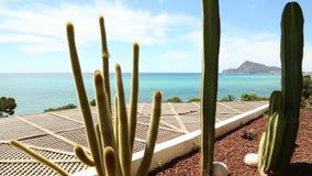 Cactussen op de Spaanse kust stock video