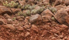 Cactussen op Rode Rotsen Royalty-vrije Stock Fotografie