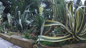 Cactussen in toevluchtpark stock video