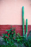 Cactustuin, Adobe-Pleistermuur Stock Afbeelding