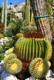 Cactustuin in Eze-dorp Royalty-vrije Stock Foto