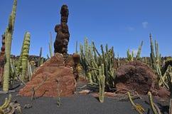 Cactustuin in Guatiza op Lanzarote Royalty-vrije Stock Foto
