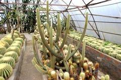 Cactustuin in Kalimpong in Darjeeling-district, India Royalty-vrije Stock Foto's