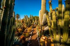 Cactustuin op het eiland van Gran Canaria stock fotografie
