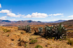 Cactusus in a desolate mountain landscape Stock Photography
