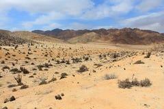 Cactuswoestijn Stock Afbeeldingen