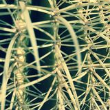Cactuszitting stock afbeelding