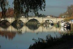 Cada alla riva del fiume del Tamigi a Richmond - sopra il Tamigi Fotografie Stock