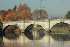 Cada alla riva del fiume del Tamigi a Richmond - sopra il Tamigi Fotografia Stock