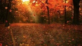 Caída de la hoja del otoño almacen de video