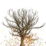 Caída del árbol Imágenes de archivo libres de regalías
