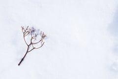 Caída deshojada de la ramita en nieve - con el espacio para el texto, área de la palabra Foto de archivo libre de regalías