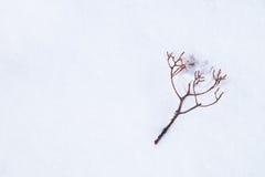 Caída deshojada de la ramita en nieve - con el espacio para el texto, área de la palabra Imagen de archivo libre de regalías