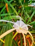 Cada flor es un alma que florece en naturaleza fotografía de archivo libre de regalías