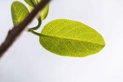 Cada folha é um milagre da natureza em si mesmo fotos de stock royalty free