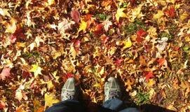 Cada nell'autunno Fotografia Stock