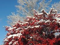 Cada nell'inverno Fotografia Stock