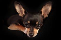 Cada perro necesita un hogar Fotografía de archivo