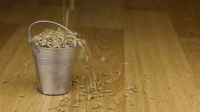 Cada in un secchio dei grani della segale e sul pavimento di legno video d archivio