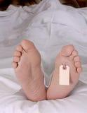 Cadaver feet Stock Photography