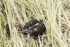 Cadavre d'oiseau dans la nature Photographie stock libre de droits