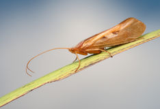 Caddis on the blade Royalty Free Stock Images