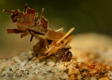 Caddisflie larvae. Under water in its home Stock Photo