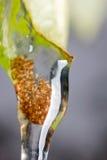 Caddisflieslarven stock afbeelding
