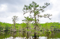 Caddo See-Nationalpark stockfoto