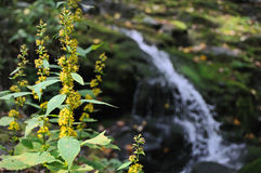 cade il fiume piney Fotografia Stock
