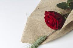 Cadeau d'amour de rose de rouge d'isolement sur un fond blanc Images stock