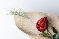 Cadeau d'amour de rose de rouge d'isolement sur un fond blanc Image stock