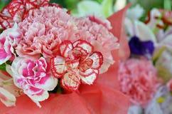 Cadeau de fleur d'oeillet photo stock