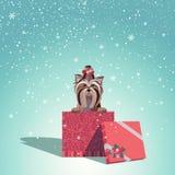 Cadeau de Noël de Yorkshire Photos libres de droits