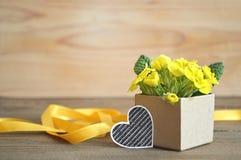 Cadeau du jour de père : Fleurs jaunes de primevère disposées dans le boîte-cadeau Photo stock