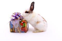 Cadeau et lièvres Photographie stock libre de droits