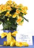 Cadeau mis en pot d'usine de mères bégonia jaune heureux de jour de beau avec les fleurs jaunes Image stock