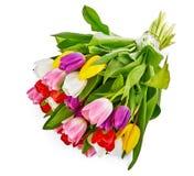 Cadeau romantique de salutations de groupe de fleurs de tulipes de ressort photos stock