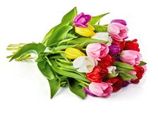 Cadeau romantique de salutations de groupe de fleurs de tulipes de ressort photo libre de droits